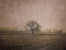 Lonely tree by Ev-Avery