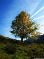 autumnal tree by Daeveren
