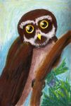 Spectacled Owl by mare-of-night