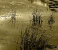 water grass by awjay