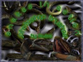 Snake Brushes by Lavica-Photoshop