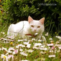 Spring whiteness by Cat-Mist