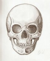 Study of a Skull by phaidor