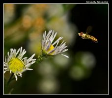 Hoverfly Hovering by boron