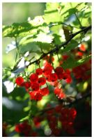 redcurrant by keffi