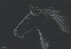 Horse on Black Paper by Shierrr