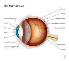 The Human Eye by catnmaus