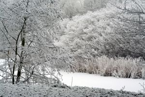 winterland 39 by priesteres-stock