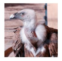 Highlander by Nataly1st
