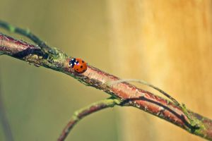 Day Eighty Four: Spring Colours by Kaz-D