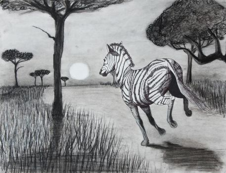 zebra by conarnia