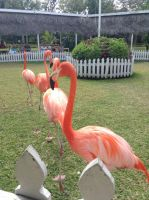 Marching Flamingoes by UnaccountedFranglais