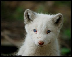 arctic cub by morho