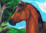 Oil Pastel Horse by YikYik