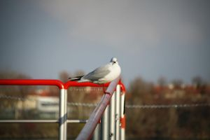 seagull by spiti84
