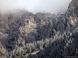First Snow by photogrifos