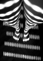 Zebra by bubastis2