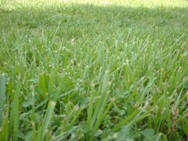 Grass Stock 2 by Noxtu-Stock