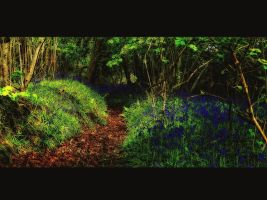 enchanted pathway by awjay