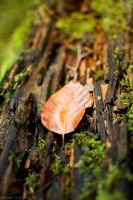Autumn Arrives by Sato-photography