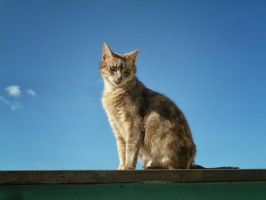 Cat in the sky by hiram67