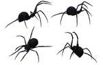 Black Widow Spider Set 07 by Free-Stock-By-Wayne