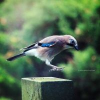 jay jumping by bluePartout