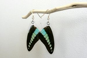 Blue Bottle Earrings (Graphium sarpedon) by TheButterflyBabe