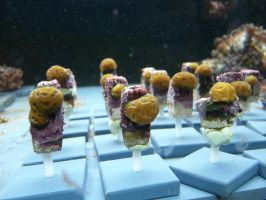 Coral Frags - Horniman Museum by Akki14