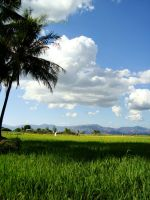 our rice farm by Litratobyberneserose