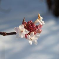 Tiny pink flowers again by TinyWild