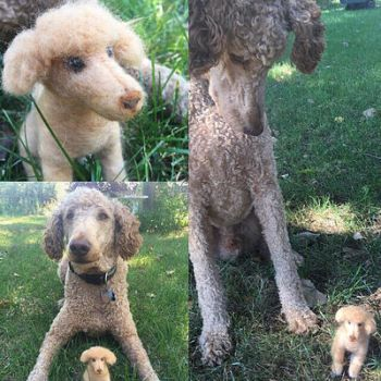 Needle Felted poodle  by NightyNighttt