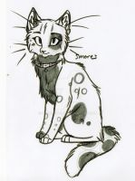 Smores the Kittypet by KasaraWolf