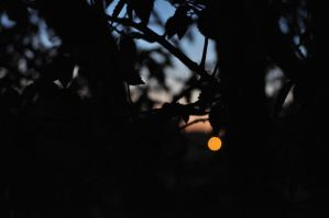 Through the Branches by Charly-Stary-Eyes