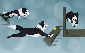Flyball by WulfTheWolf