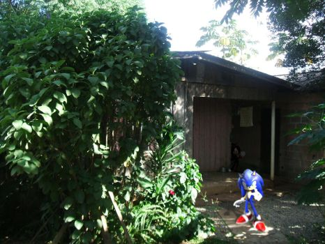 Sonic In My Home by Sonic-Ramone
