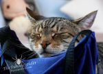 Nap Time on my waist bag by TheFunnySpider