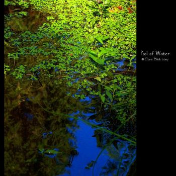 Pool of Water by clarablick