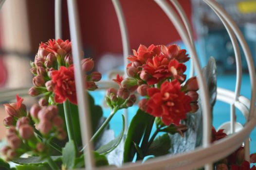 Caged Flowers by Livvy583