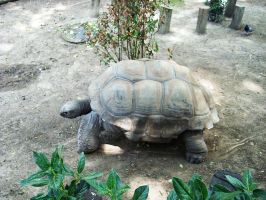 Turtle 1 by Etereas-stock