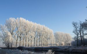 Frozen Trees by murtoz