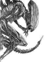 Xenomorph by SnailShoes