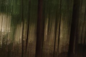 Forest by chanali