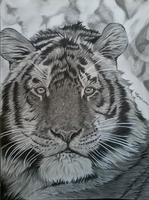 Siberian Tiger by TheArtistSamanthaST