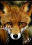 +Red Fox+ by mejony