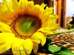 .::Sunflower::. by samion