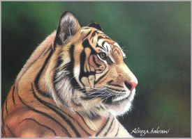 Tiger-final by abgraph