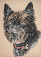 Cairn terrier dog by Jniq
