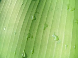 Leaf Texture 02 by DKD-Stock