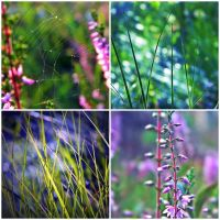 summer collage by Iridescent-happinesS